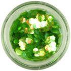Zelený nail art šesťhran - aquaelements