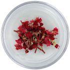 Sušené kvety - červené