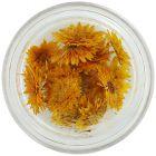 Sušené kvety - oranžové
