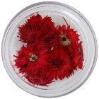 Ozdobné sušené kvietky - červené