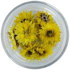 Sušené kvety - žlté